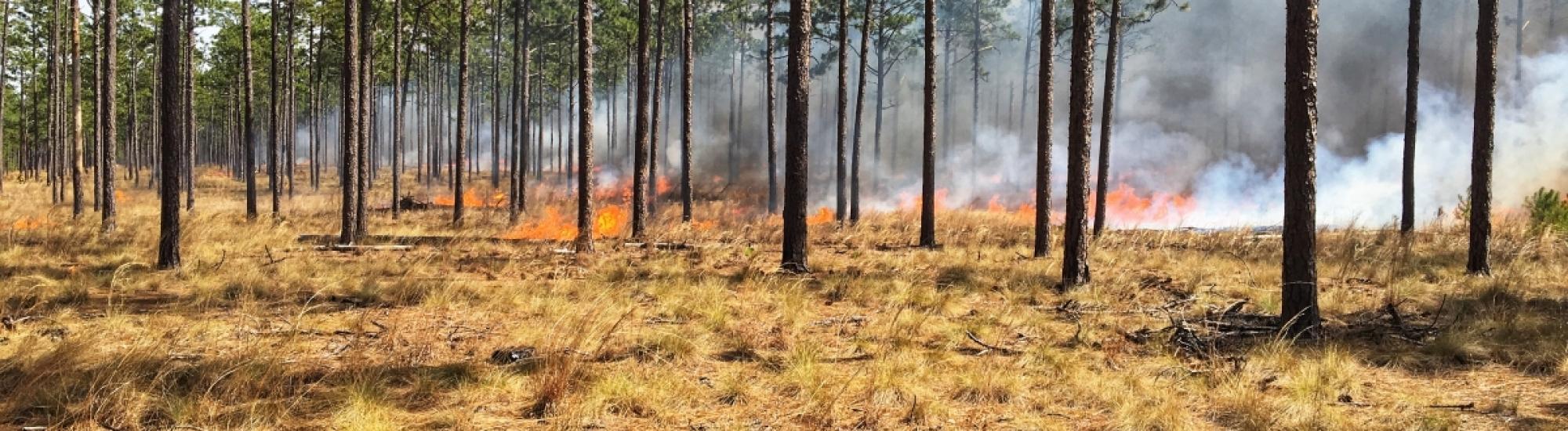 Field burning
