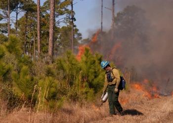 firefighter lighting backfire